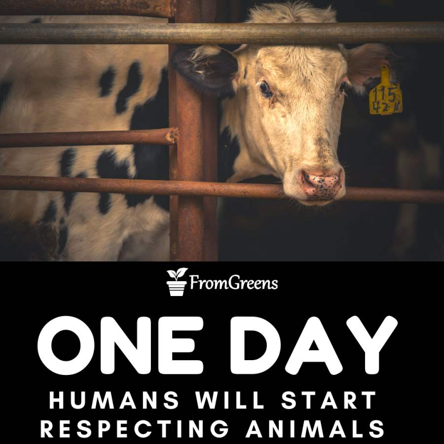 Motivational animal rights quotes