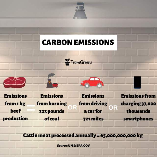 carbon emissions infographics - Evidence Based