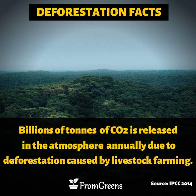 Deforestation quotes and facts - Evidence based