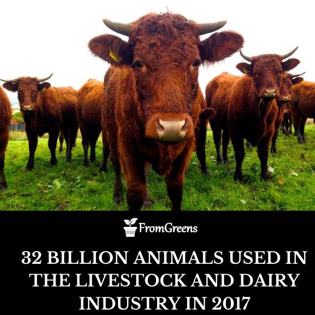 Animal farming shocking facts