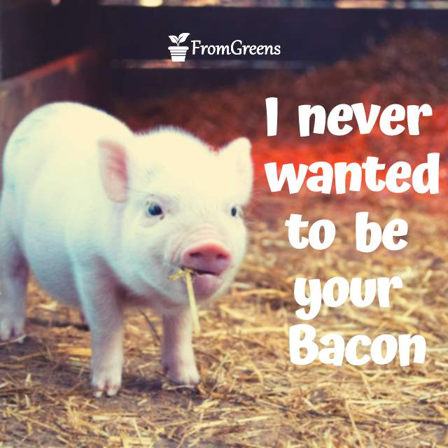 Motivational pig quotes on animal rights