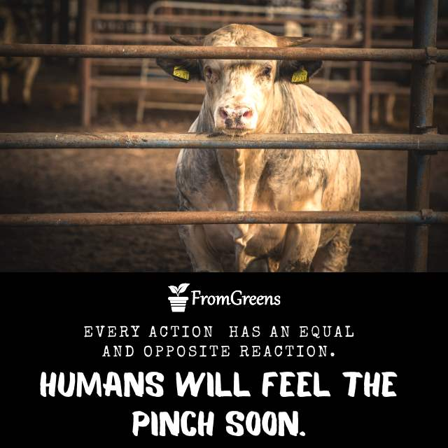 Motivational cow quotes on animal cruelty