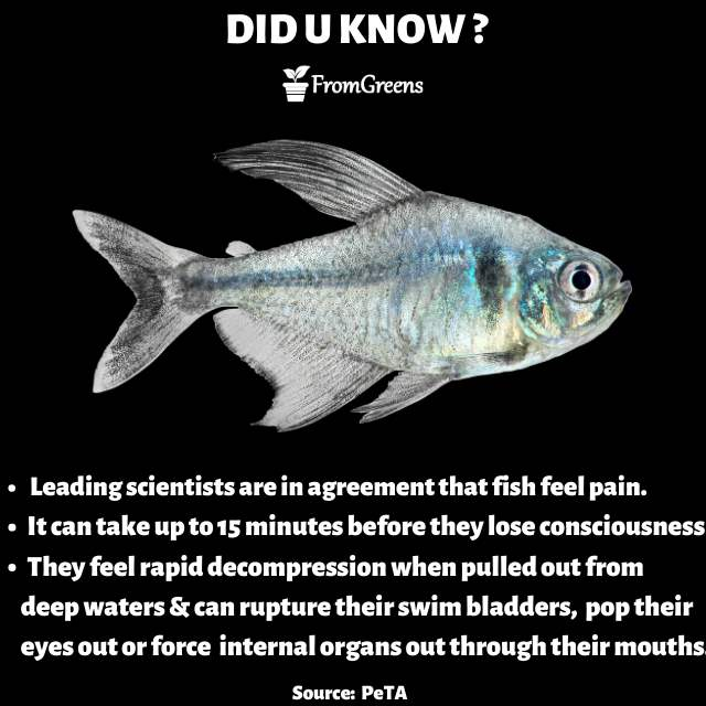 Animal rights - Did you know fish facts